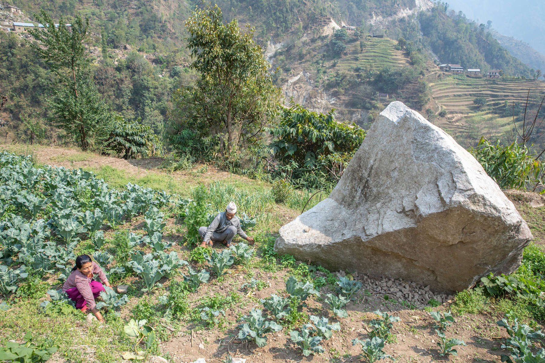 "Sabitri Phuyal and her husband, Shyam Prasad Dahal, work in their vegetable fields, surrounded by boulders that rained down on their village during the earthquake of 2015. They depended on their vegetable farm for food and income until the 2015 earthquakes triggered a landslide that wiped out their fields and made it unsafe for them to live in their home. They lived in a temporary shelter with four other families for nine months, and couldn't work, until Mercy Corps built a gabion wall that secured the hillside above the couple's home. After the wall was built, Shyam and Sabitri finally felt safe enough to return and begin rebuilding their lives. They took a Mercy Corps'-facilitated vegetable farming training and received plastic sheeting to build a greenhouse, and also participated in Mercy Corps' family dialogue training, which helps women and heads of household work to together to become stronger and more resilient. ""We had lost all hope of coming back. With all that happened, we don't have enough wealth to relocate somewhere else and start a new life as well. So we got encouragement to start farming here, start making our livelihood here again,"" says Shyam. ""I feel happy when he asks me for my opinion,"" Sabitri says. ""Before he would just do it himself, and he would work in the fields himself. And I would just think, 'OK that's his job. I'll just let him do it.' But when he asks me, I feel like, 'OK, this is my responsibility too.' I feel good about it. """
