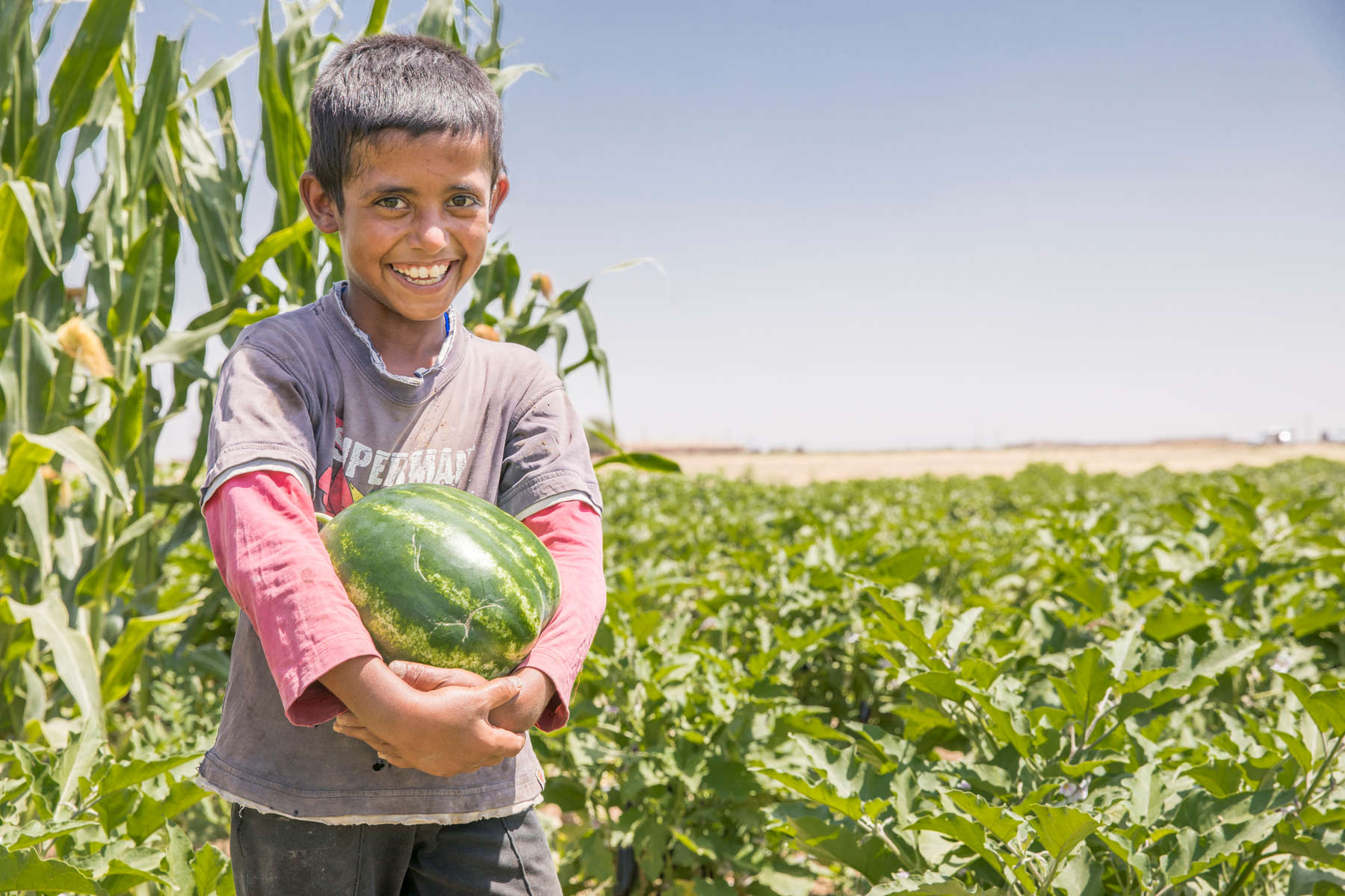 Abu Goubran's son Safouan, 12, harvests watermelon. Abu Goubran does not own land, but has significant agricultural expertise thanks to a lifetime spent working in farming. Mercy Corps connected him to a landowner who was interested in benefiting from that expertise, and provided some resources to improve the farm, including building a greenhouse. Together, they have seen yields increase dramatically. The greenhouse generates 10 times the yield of the same area of land not under a greenhouse, Abu Goubran says. The use of greenhouses is not common in this area, so they were the first to be able to grow out of season vegetables. They use organic methods, with an apiary on site to pollinate the fields. They also open the farm to do training sessions for local farmers on innovative farming techniques.Between Abu Goubran, the landowner, the various laborers who work the fields and another partner who helps with purchasing supplies the farm directly supports four families. The village is home to another 400 families who benefit indirectly from reduced prices and a broader range of foods.