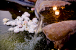Details_31_Rose-Story-Farm_Details_01