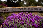 Details_44_San-Ysidro-Ranch_Lavender_01_v2