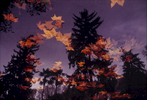 FineArt_03_Autumn-Leaves_Gerona_-Spain_v2
