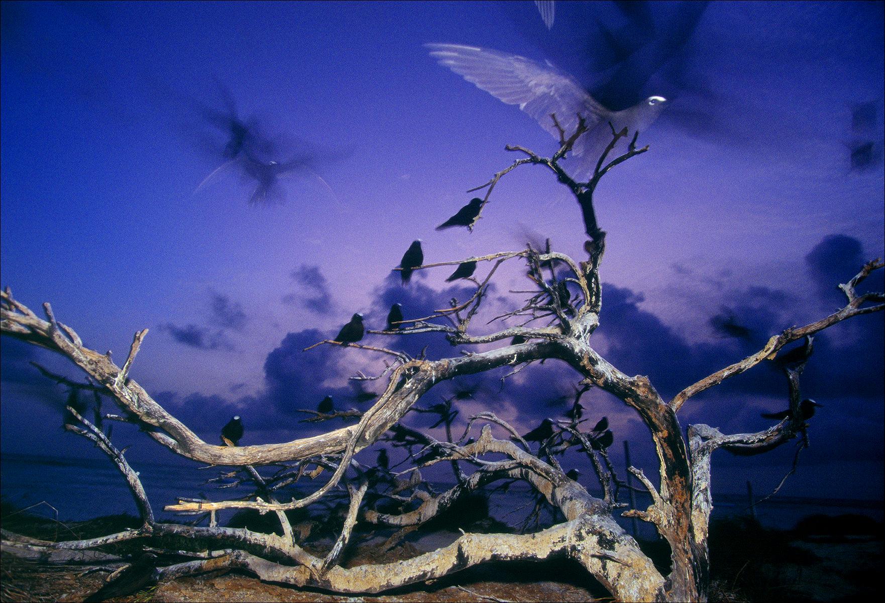FineArt_13_Dusk-Flight_Atol-das-Rocas_-Brazil