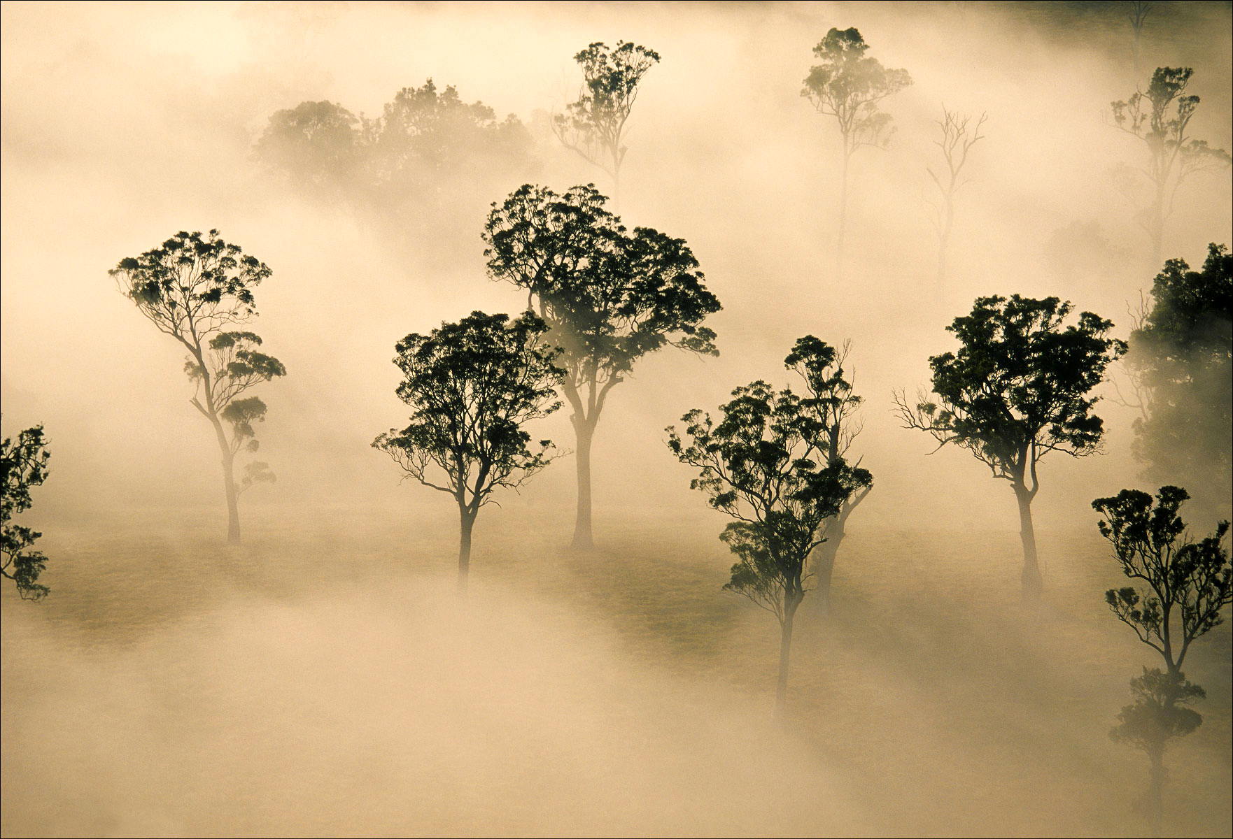 FineArt_31_Trees-In-The-Mist_Eden_-NSW