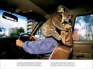 Published_Koalas_National-Geographic-Mag_03
