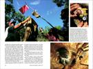 Published_Koalas_National-Geographic-Mag_05