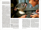 Published_Koalas_National-Geographic-Mag_06