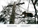 Published_Koalas_National-Geographic-Mag_10
