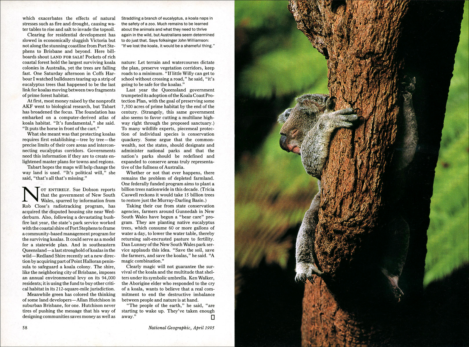 Published_Koalas_National-Geographic-Mag_11