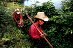 Published_Material-World_Guatemala_03