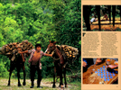 Published_Maya-Heartland_National-Geo-Mag_03