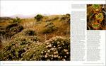Published_Santa-Cruz-Island_Nature-Conservancy_07