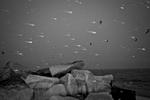 Snow storm 2015.  Yunghi Kim © 2015