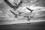 The seagulls rule the boardwalk unchallenged in the winter. Yunghi Kim ©2014