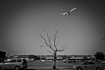 9/24/2015  Jackson Heights at the border to East Elmhurst neighborhood,  Queens NY. Flights going into Laguardia Airport.  © 2015 Yunghi Kim/Contact Press Images.
