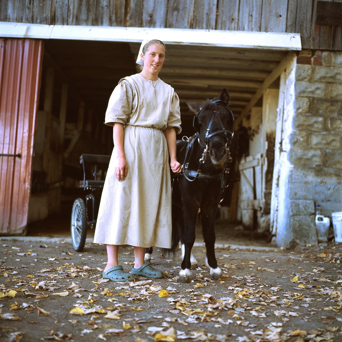 Amish-Pony