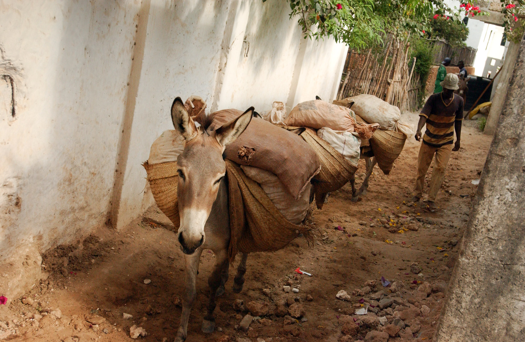 Donkeys-Bags
