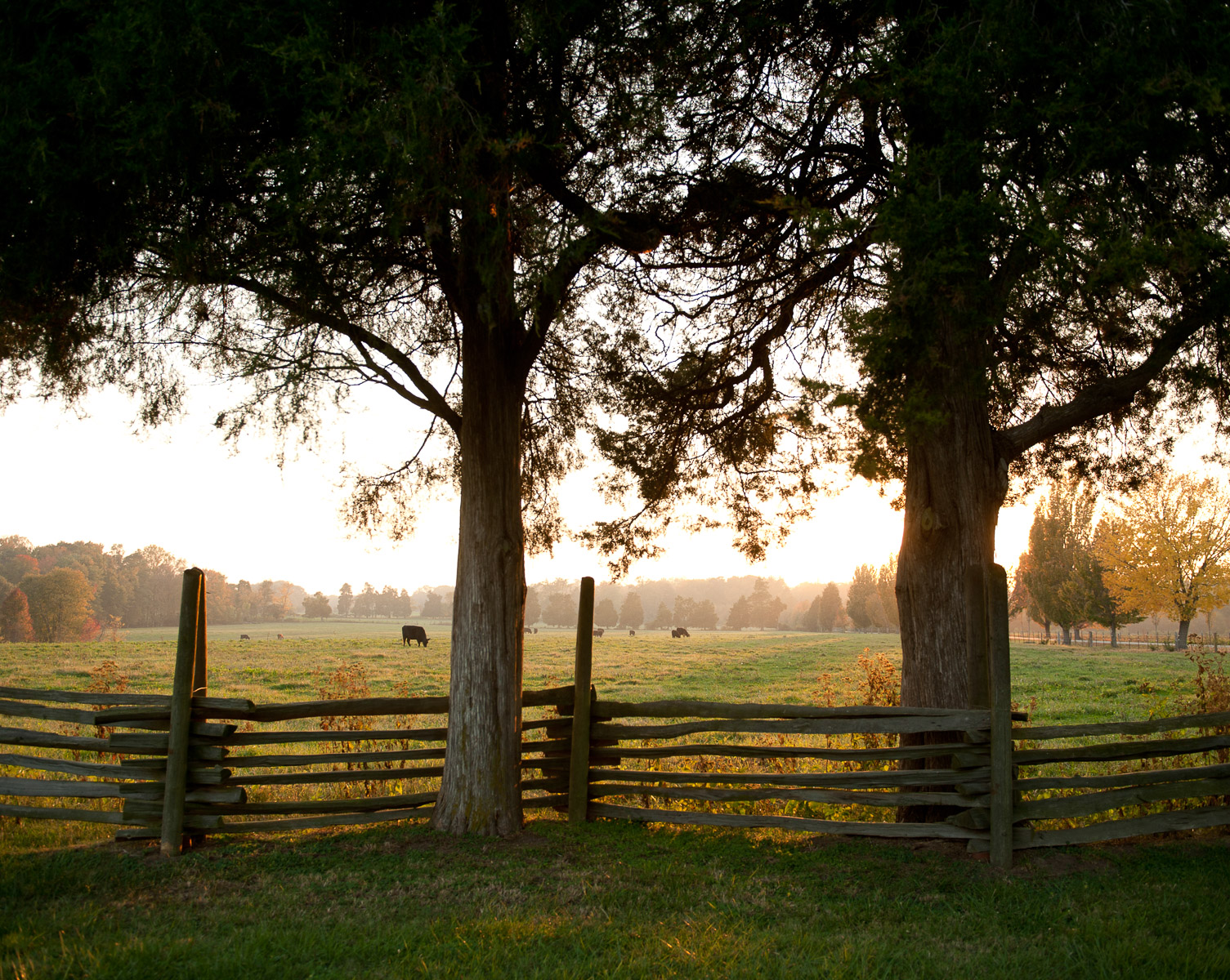 Post and rider fences are used to keep cattle in the pastures at Washington's Birthplace National Monument in Colonial, Virginia. There is a 1930's reproduction of the original house at the site, which burned down in 1792. October 25, 2012. Vanessa Vick for The New York Times