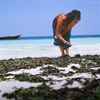Shells-Seaweed