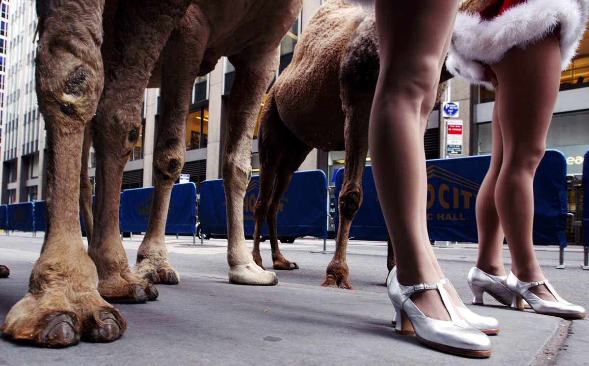 Members of The Rockettes pose with their camel cast mates on the street outside Radio City Music Hall in New York on Nov. 11, 2002, during a promotional event for the upcoming Radio City Christmas Spectacular.