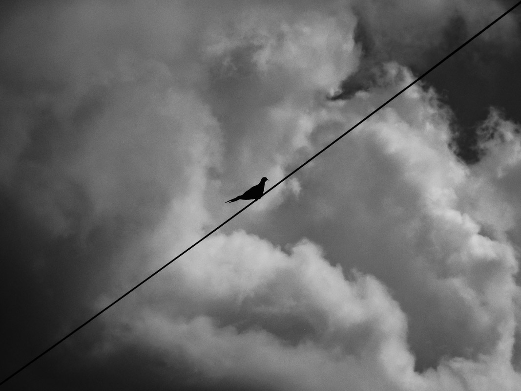 Bird on a cablePhiladelphia, PA