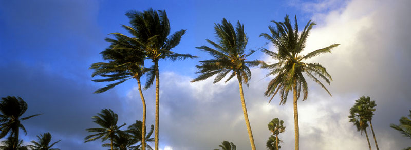 The trade winds act to moderate temperature and humidity carry away stress as well as insects.  The unique sound the palm fronds make while dancing in the breeze create a tropical lulaby.