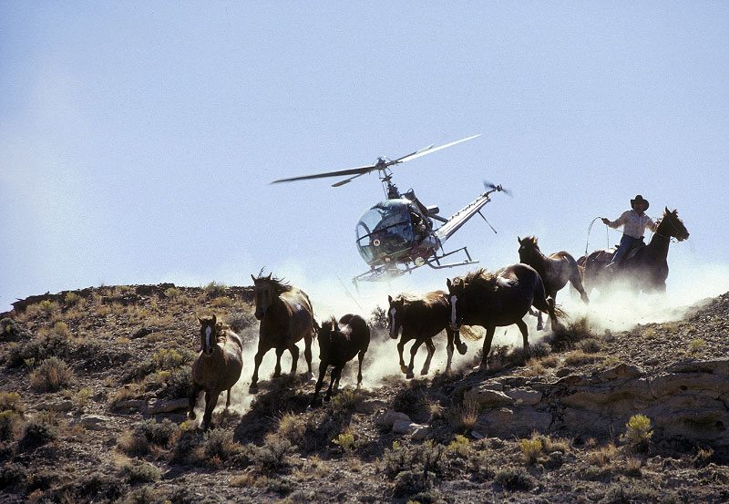 Horse Helicopter Helicopter Wild Horse Round-up