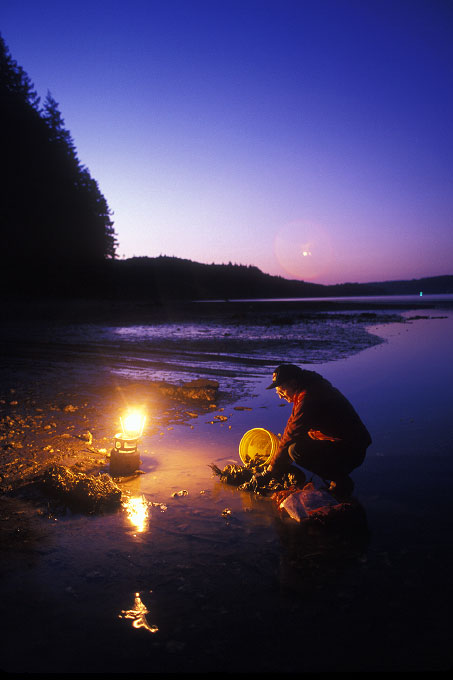 Shot on assignment for SUNSET Magazine. Oysters are harvested at lowtide, and lowtide comes at all hours of the day. A worker gathers Quillcene oysters  by lantern light after sunset at Daybob Bay on Hoods Canal,Washington.