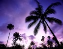Palm trees on Molokais west shore stand in silloette against the emerging purple hues of sunset.