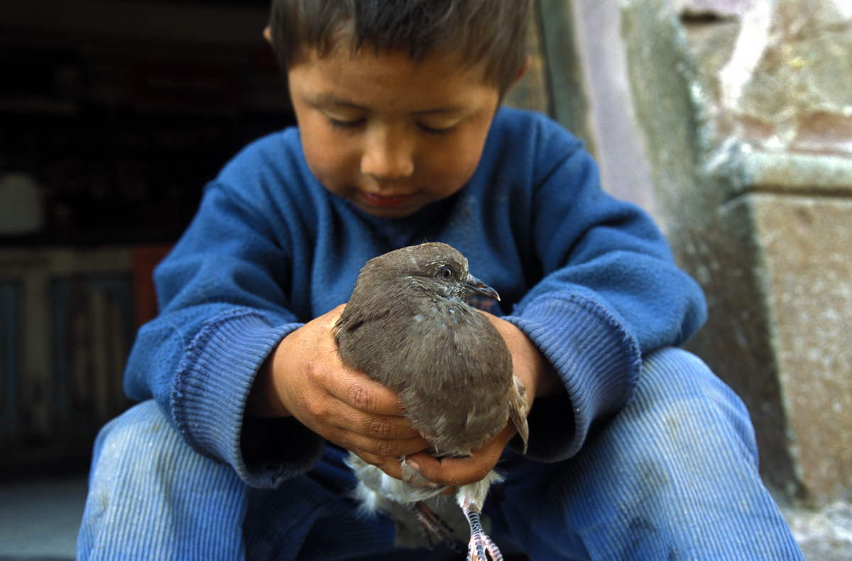 Shopkeeper's son with his pet pigeon. Real de Catorce, Mexico