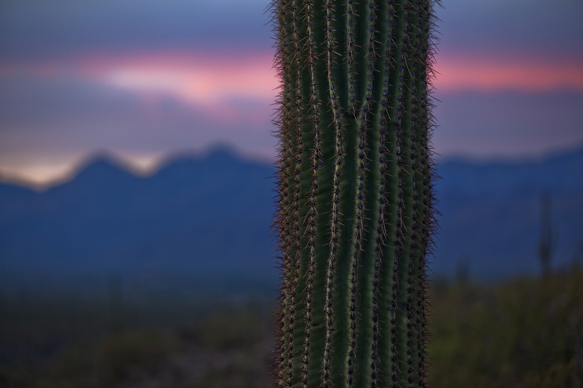 Sunset, Saguaro National Park, Arizona