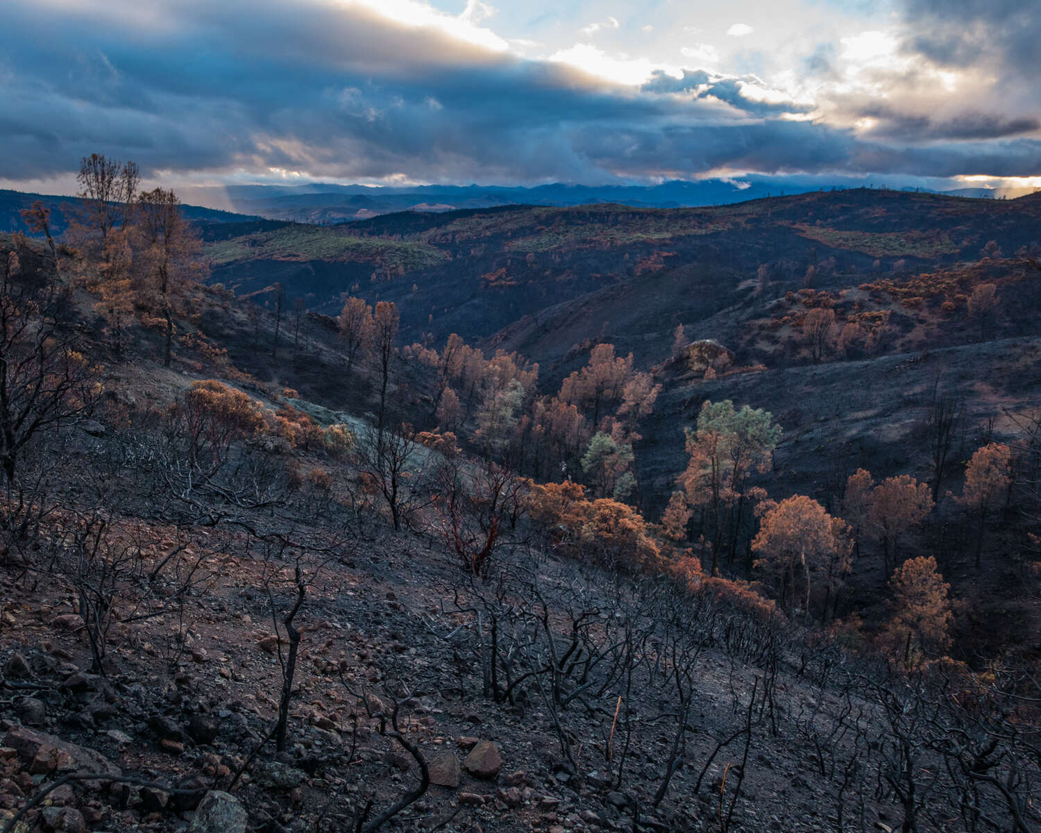 After the burn. Lake County, California