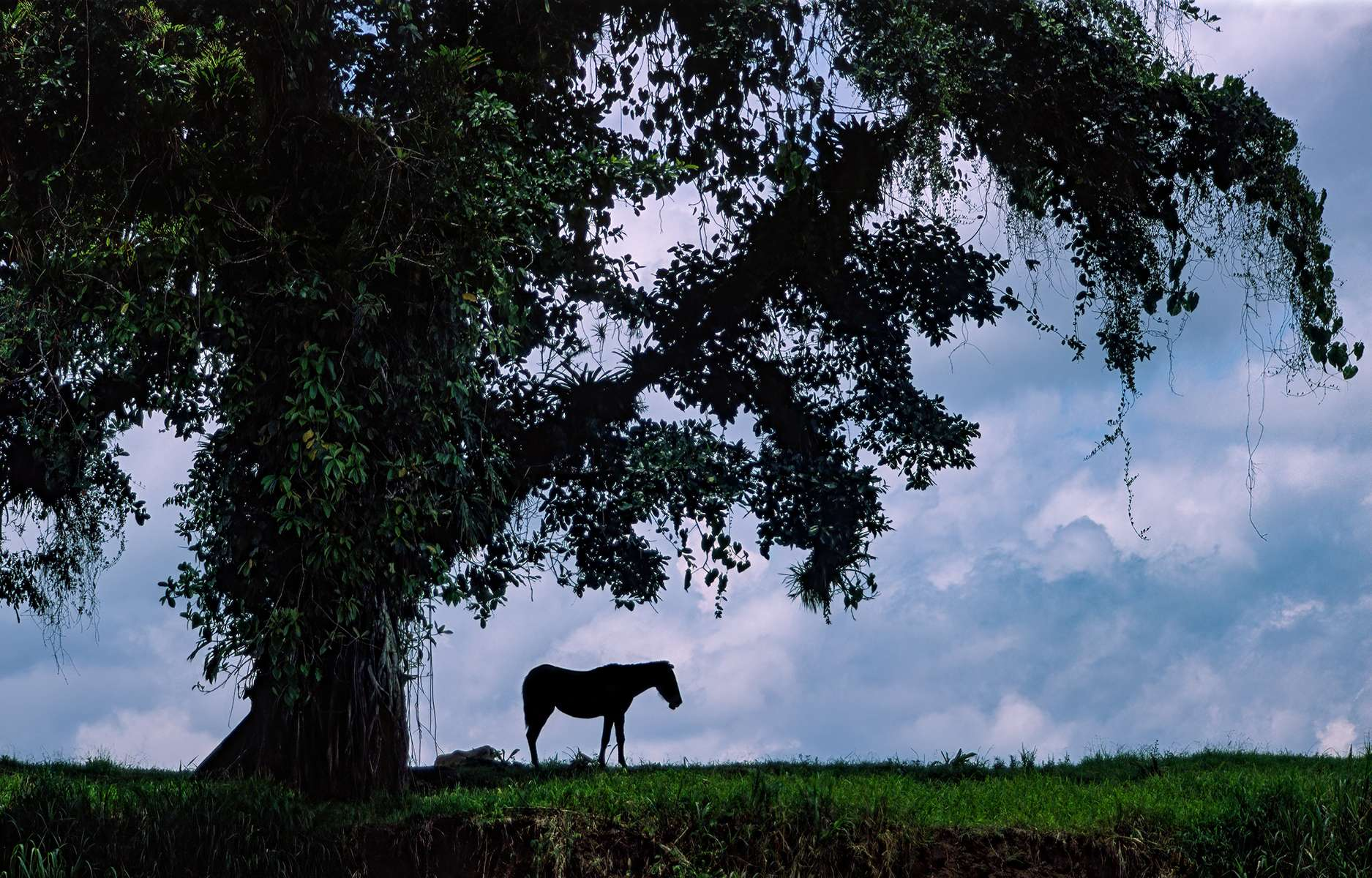 Countryside in northern Costa Rica.