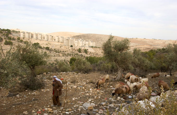 Palestinian sheperd herds his sheep and goats in the West Bank city of Bethlehem on December 27, 2005.