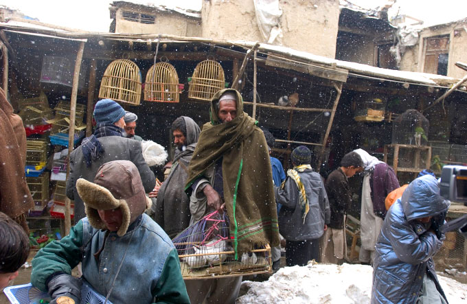 Winter scene at the bird market in Kabul. There one can buy dozens of different kinds of birds and rabbits.  Some of these birds are for eating and others are sold for {quote}bird fights{quote}