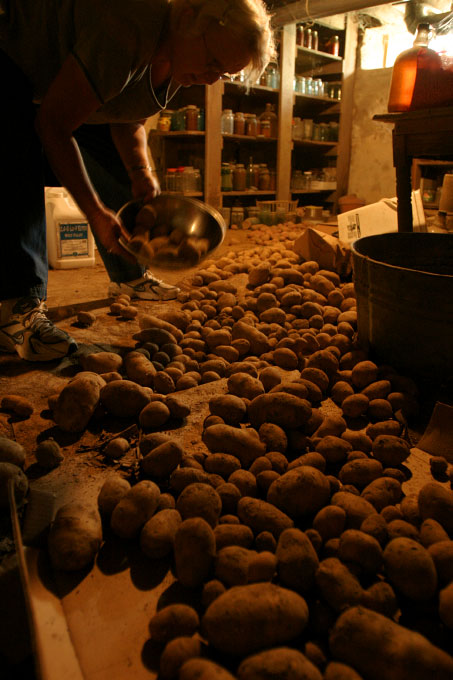 Marilyn spreads her homegrown potatoes on the cellar floor, whose coldness and dryness lengthens the tubers' shelf life.  With the exception of corn and soy crop, the Loehnigs eat everything they grow.  They can and store sauerkraut, jams and meats.