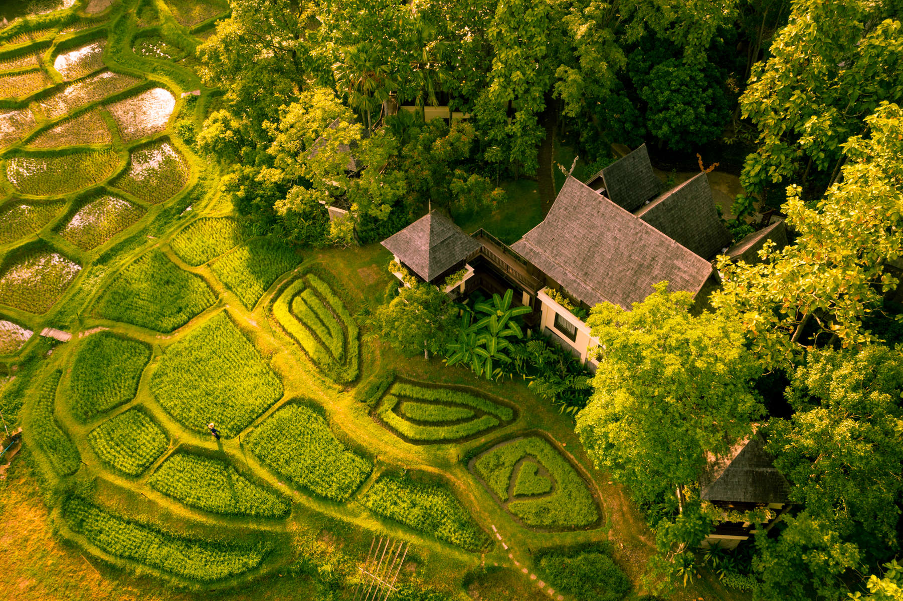 A beautiful private bunggalo surrounded by trees and rice paddies.
