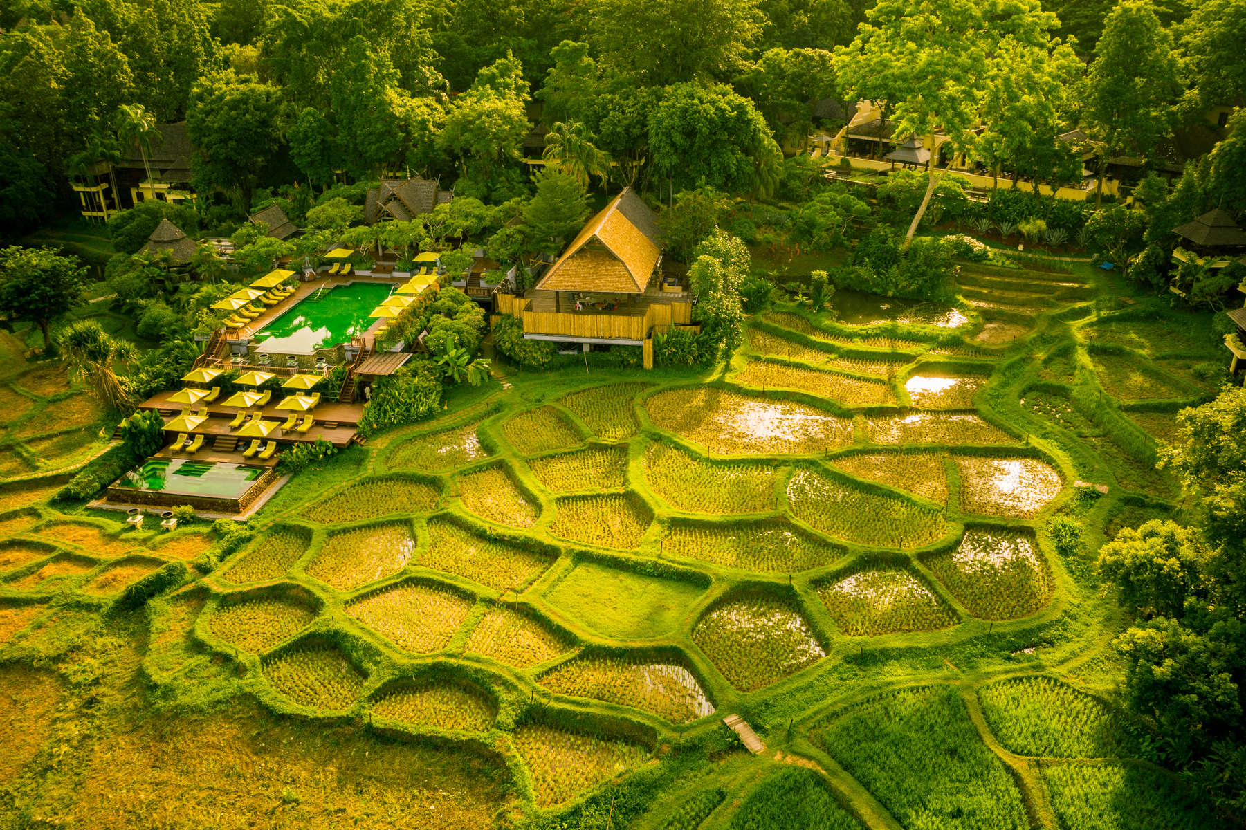 The beautiful emerald green swimming pool and restaurant surrounded by rice paddies.
