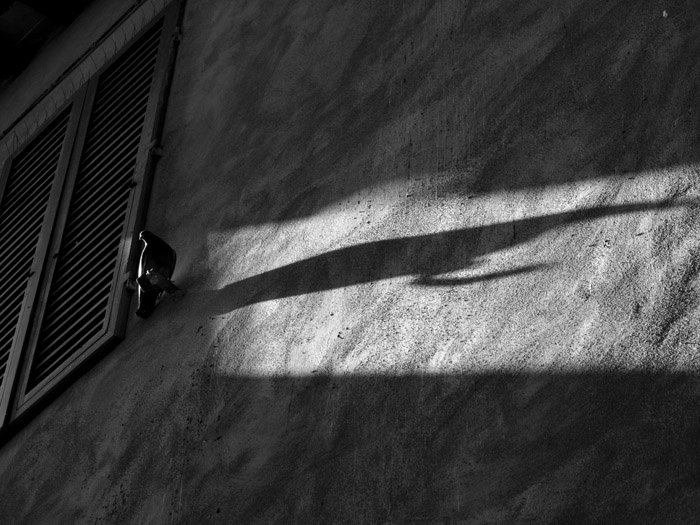 Shadow of a morning dove.