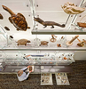 National Museum of Natural HistoryDiscovery RoomSmithsonianWashington, DCEwingCole