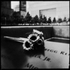 Sunflower at 9/11 Memorial Site in New York. The flower language is hope... A day before the anniversary.