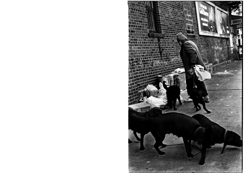 A homeless man is looking for food and anyhing worth for him and his dogs.New York, Dec 25, 1988.