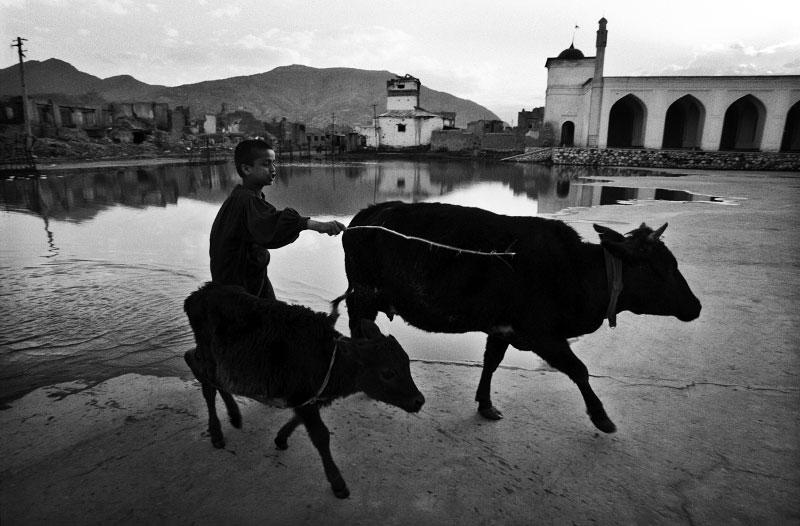 afghan015