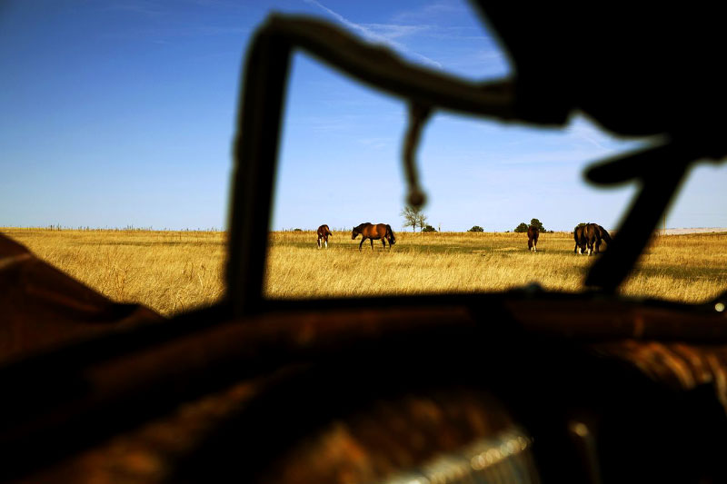Horses are seen through an abandoned car in the Pine Ridge reservation.