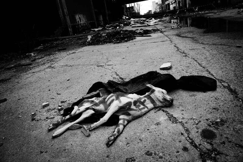 A dog body with sadistic painting lies at the former Packard Automobile Manufacturing Plant site, created in 1907. The plant was the most innovated plant in those days.