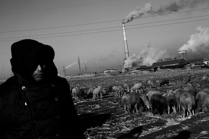 A shepherd stays near coal burning power plants at the suburb of a extremely frigid remote coal industrial town of Jixi in China's North East where the majority used to be Manchu, Tungusic nomad people. Coal is a primary source for power, heating and cooking fuel in China in modern days, despite the environmental health hazards.
