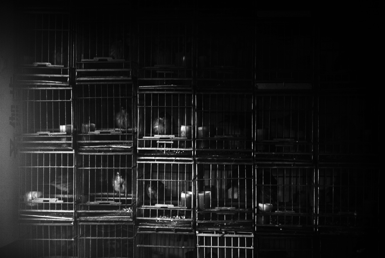 Caged small birds are for sale in a poor community of Harbin whose residents have been facing demolition often unfairly.China's North East was once called Manchuria. The region was at a crossroads that was manipulated in history, including the occupation by Russia and Japan. And now the area is facing upheavals due to the globalization with China's rapid economic growth itself, creating the gap between the rich and the poor and even more unemployment.