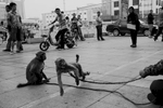 A man has monkeys perform to make the ends meet, as many of Chinese Mongolians are experiencing the cultural and economic strife caused by marginalizing due to the Chinese massive urbanization. Hohhot, Inner Mongolia.