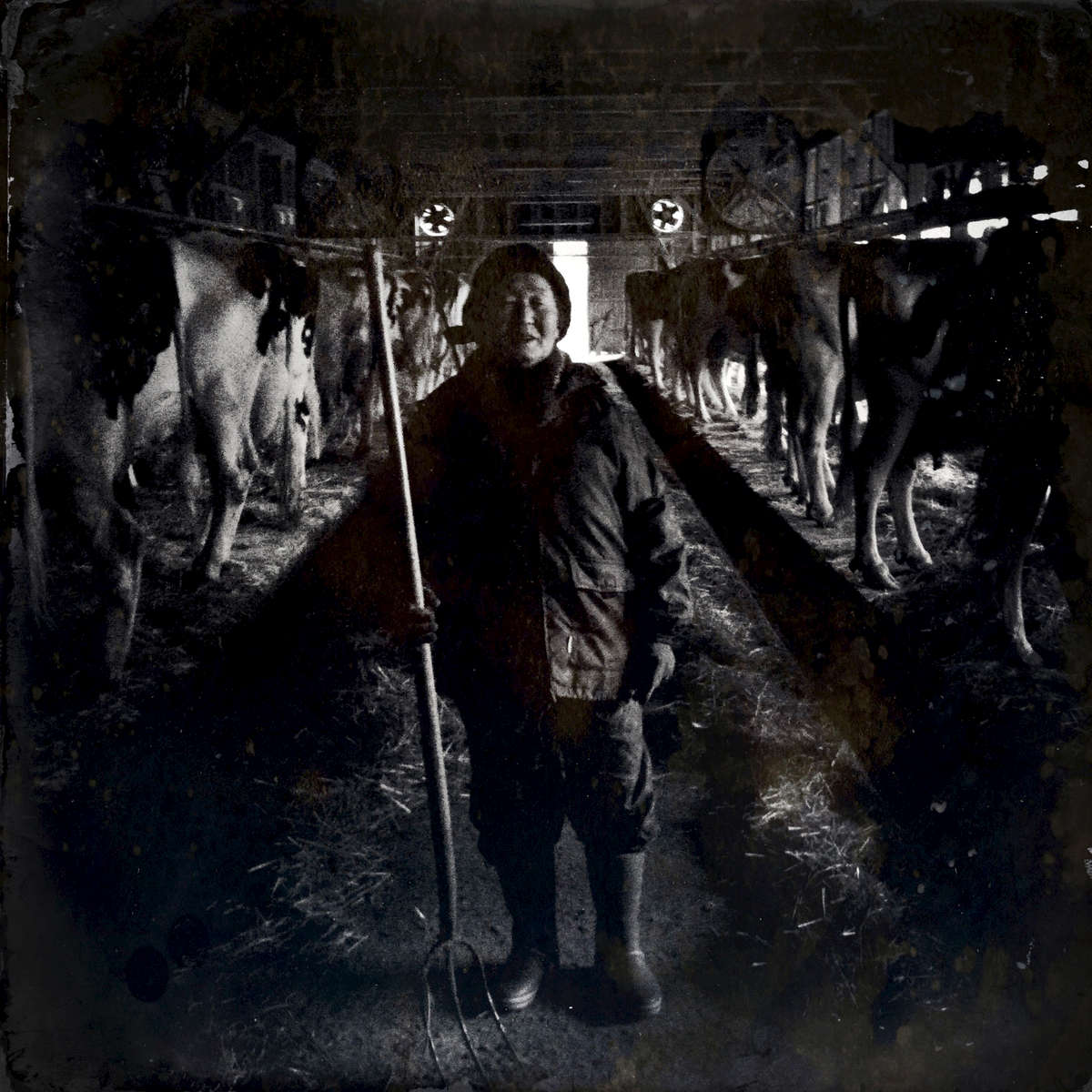 Tamano Konno, 75, Fukushima evacuee, at her barely survived dairy farm. In 2016, consequently it closed. Feb/ 2013, Motomiya.