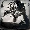 Dead orchard. Feb/ 2013, Inawashiro, Yama.