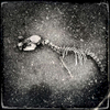 Remains of a creature, probably cat, near an abandoned school. Mar/ 2013, Tsushima, Namie.